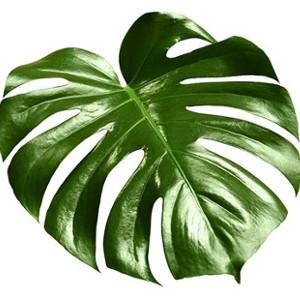 Ściereczki do pielęgnacji roślin