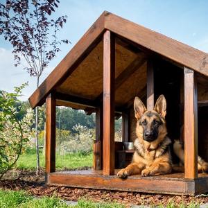 Produkty pielęgnacyjne dla psów