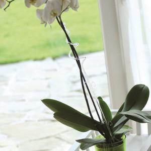 Drabinki i podpory dla roślin