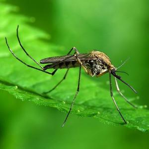 Na komary
