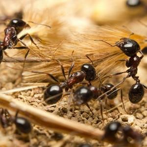 Na mrówki