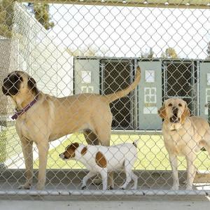 Odstraszacze psów i kotów