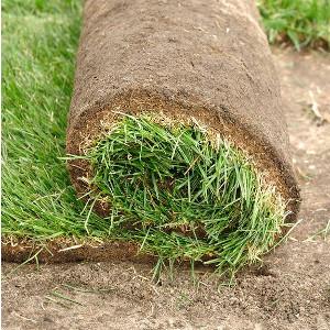Naprawa i odnowa trawnika