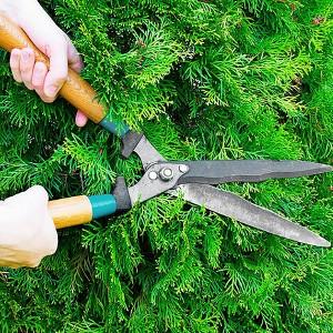 Nożyce i nożyczki