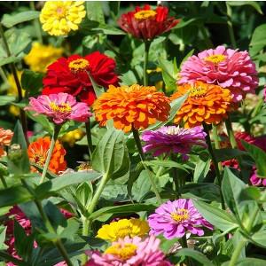 Nawozy do roślin kwitnących