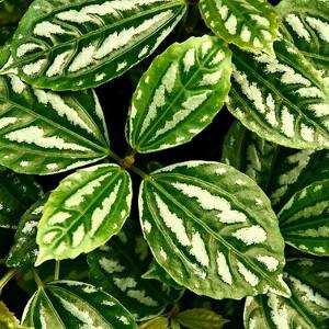 Nawozy do roślin zielonych