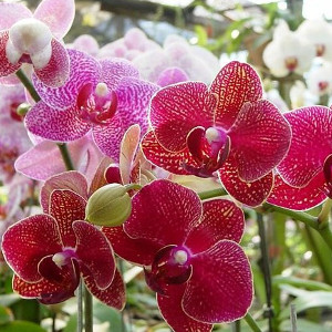 Nawozy do orchidei i storczyków