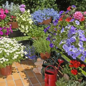 Nawozy do roślin domowych i balkonowych