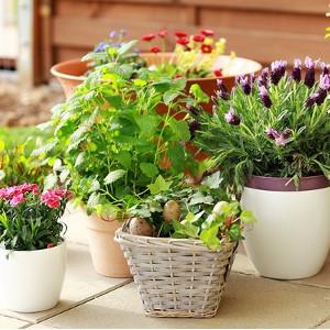 Nawozy do roślin doniczkowych