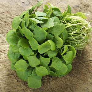 Nasiona portulaki warzywnej