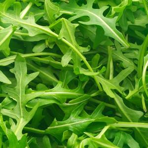 Nasiona rukoli (rokietty siewnej)